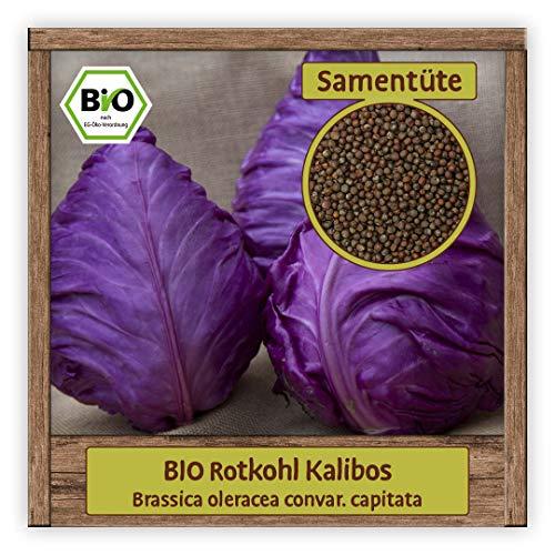 BIO Spitzkohl Samen Rotkohl Gemüsesamen Kalibos...